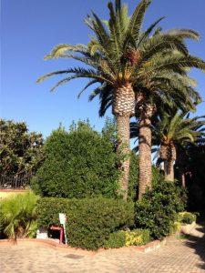 Hotel unter Palmen